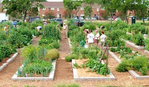 Join Westbury Community Garden!