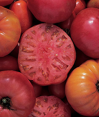 Mortgage Lifter is an heirloom tomato of legendary size and great taste. Mid-season fruits are beefsteak-shaped and 16-24 oz up to 4 lbs! Indeterminate.